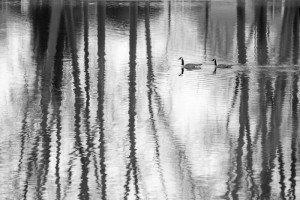 Geese by Dan Eggert