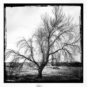 Awaiting Spring - Arlene Stanger
